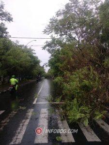 Antisipasi Dampak Hujan dan Angin Kencang, Oded Minta DPKP3 Periksa Ulang Pohon dan Reklame